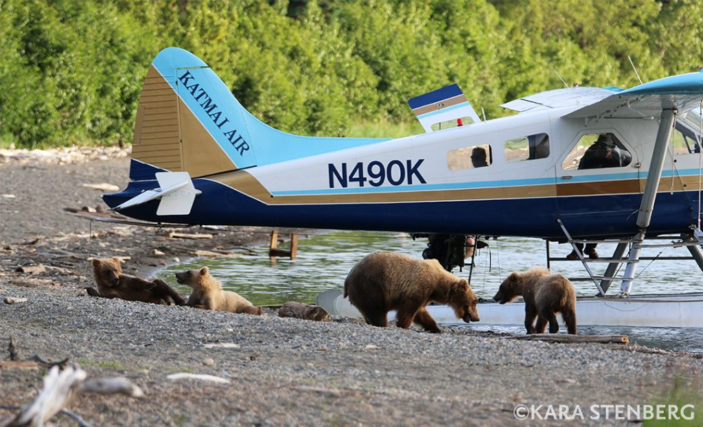 Brooks Lodge Float Plane and Bear Jam