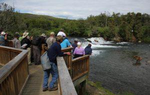 Brooks Lodge Brooks Falls Bear Viewing Platform