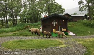 Brooks Lodge Bears and Cabins