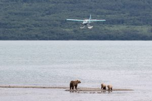 Brooks Lodge Otter Float Plane and Bears
