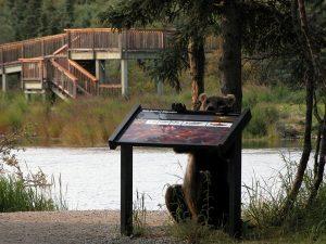 Brooks Lodge Bear and Salmon