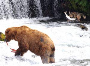 Brooks Lodge Brooks Falls Bear and Wolf