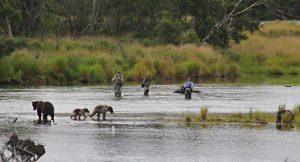 Brooks Lodge Fishing with Bears