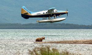 Brooks Lodge Katmai Air Float Plane and Bear